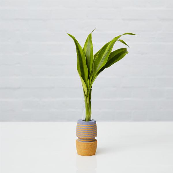 LIO Single Stem Vase 10
